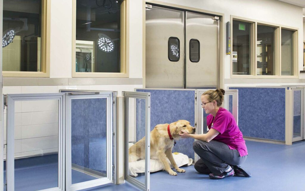 Image of Contact PAWS for MAPS4- We need a new animal shelter for OKC